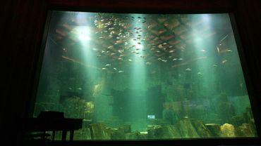 """L'artiste japonaise Maki Ohkojima expose à l'Aquarium du Trocadéro à Paris """"l'Oeil de la baleine"""", une fresque de 300 mètres carrés où nagent cinq cétacés géants."""