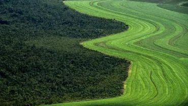 Déforestation: une centaine d'ONG appelle UE et Belgique à prendre leurs responsabilités