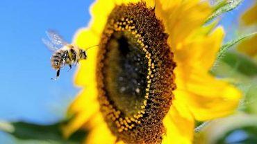 La valeur économique de la pollinisation est estimée à 153 milliards d'euros par an