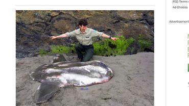 Un poisson-lune découvert aux abords du Golfe d'Alaska.