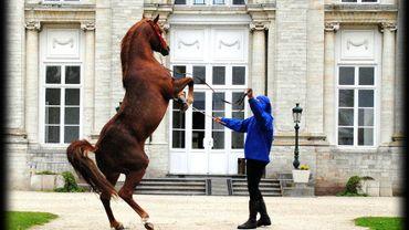 Arts Equestres Hélécine