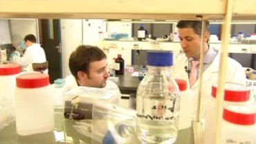 Une bactérie pour lutter contre l'obésité bientôt testée chez l'homme