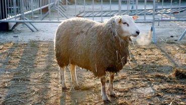 Le site permettra l'abattage de 600 moutons et accueillera tant les habitants de Bruxelles-Ville que ceux de Saint-Josse et d'Evere.