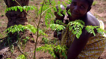Une Béninoise pose à côté d'un Moringa