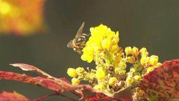 Le retour des abeilles, un sujet printannier