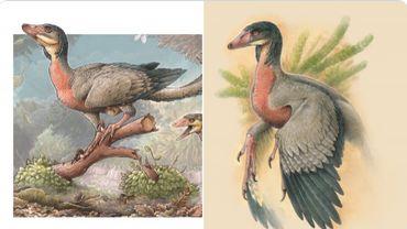 Argentine : les restes d'un nouveau petit dinosaure carnivore ailé découverts