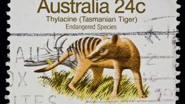 Le mystérieux marsupial, également connu sous l'appellation thylacine, était jadis très répandu en Australie. Mais il a totalement disparu du continent il y a environ 3.000 ans.