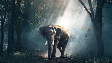 Des prostates d'éléphants pas faciles d'accès !