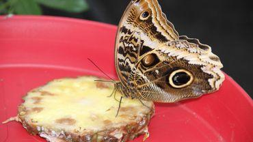 La balade de Carine : Tournai : la serre aux papillons est accessible !