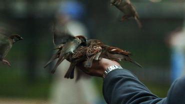 La Ligue de protection des oiseaux vole au secours de l'Unité anti-braconnage wallonne
