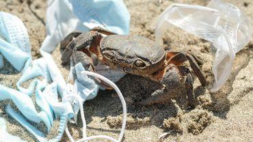 Les masques faciaux utilisés pour limiter la propagation du Covid-19 se révèlent néfastes pour la vie animale.