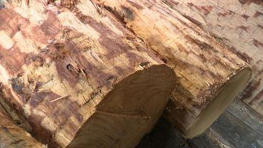Industrie du bois: le marché belge déstabilisé par les exportations en Chine