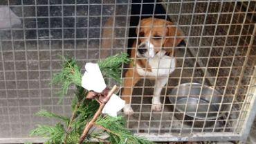 Adopter un chien pour l'offrir en cadeau pour les Fêtes: une très mauvaise idée