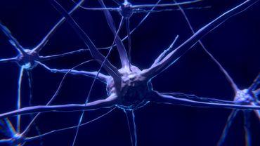 """Des chercheurs belges ont élaboré le premier """"atlas des cellules"""" d'un cerveau"""