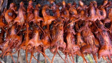 Des rats grillés sont proposés à la vente, le 8 août 2019 sur un étal de la province de Battambang, dans l'ouest du Cambodge