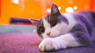 Cuby, l'adorable chat de Viva for Life