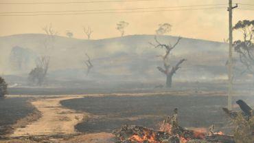 Paysage apocalyptique à Bumbalong, (N-G-du Sud) le 02 février