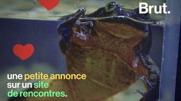 Potentielle dernière représentante de son espèce, cette grenouille cherche l'âme-sœur sur Internet