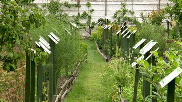 Les plantes médicinales du jardin de l'Hôpital Notre-Dame à la Rose