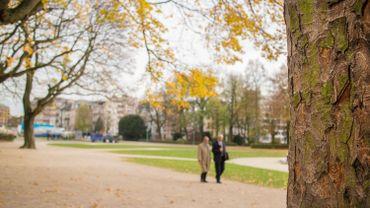Bruxelles compte de plus en plus d'arbres d'alignement, et ils ne sont pas choisis par hasard