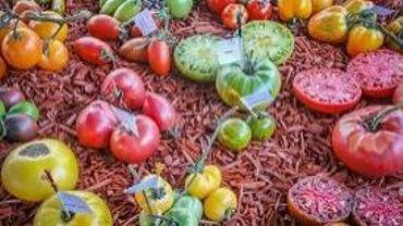 Brussels Tomato Festival.