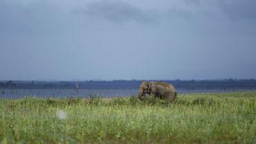 La moitié des sites naturels classés par l'Unesco menacés par le trafic illégal