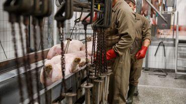 La Wallonie finalise une charte prévoyant notamment des caméras dans les abattoirs