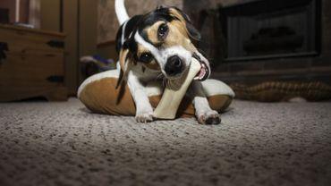 Zoom sur les friandises à donner à votre chien