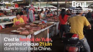 Chine: des milliers de chiens et de chats tués pour être mangés lors d'un festival annuel
