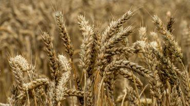 Sécheresse: le Fédéral adopte cinq mesures de soutien aux agriculteurs
