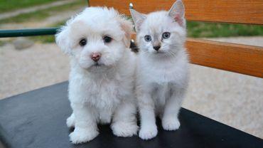 On compte 3,7 millions de chats et de chiens en Belgique.