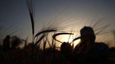 """30% des agriculteurs wallons sont en burn-out: """"On travaille plus pour gagner moins"""""""