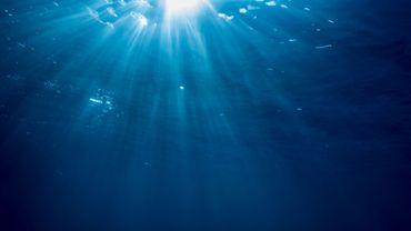 Les canicules marines en plein boom menacent les écosystèmes (étude)