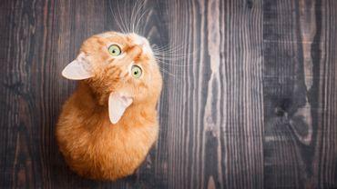 Les questions à vous poser avant d'adopter un animal de compagnie