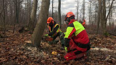 Des formations et un nouveau permis pour réduire le nombre d'accidents de tronçonneuses