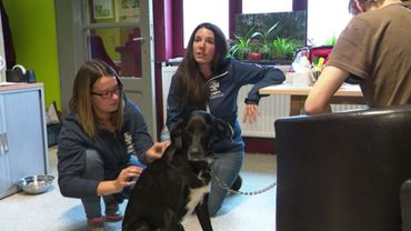 Une assistante vétérinaire ausculte le chien de Xavier en compagnie de Sarah Bodart (au centre), coordinatrice de l'Union wallonne pour la protection animale.