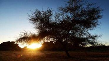 Niger: 34 migrants dont 20 enfants retrouvés morts dans le désert