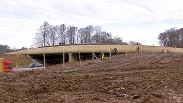 Ecoduct en Forêt de Soignes, un compromis entre écologie et sécurité routière