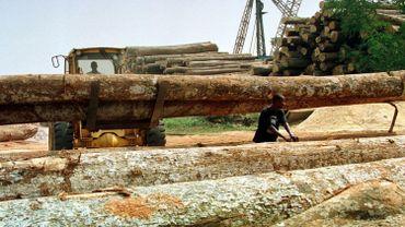 Du bois exotique illégal qui a transité par Anvers a été saisi en Allemagne