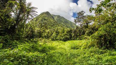 Ces parcs naturels régionaux (dont deux ultramarins en Martinique et en Guyane) représentent plus de 15% du territoire français.