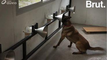 Un programme apprend aux chiens à détecter des cellules cancéreuses