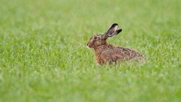 Biodiversité: comment protéger le petit gibier?