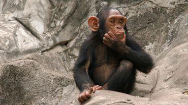 A l'ombre des grands arbres du zoo du Caire, des enfants lancent des morceaux de nourriture aux nombreux singes, essayant de provoquer une réaction susceptible de les faire rire.