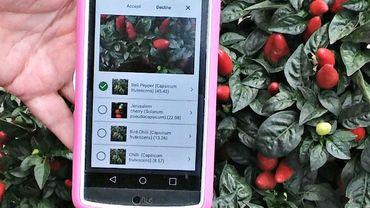 Quelle application choisir pour identifier une plante ? On en a testé 3.
