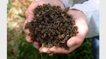 Un apiculteur inspecte l'une de ses ruches