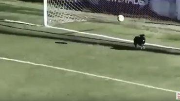 Le chien gardien de but, en Argentine