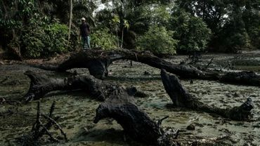 Un pêcheur se tient debout sur le tronc d'un arbre tombé au sol, imbibé de pétrole, dans le village de K-Dere, dans la région du delta du Niger, au Nigeria, le 20 février 2019