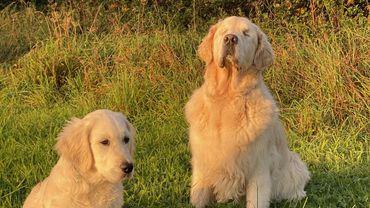 Ce chien aveugle a son propre chien guide !