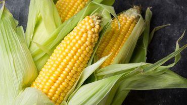 Utiliser des résidus de maïs pour filtrer l'eau ? La méthode est à l'étude.