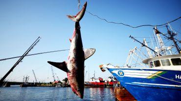 L'appétit des Thaïlandais pour la soupe d'ailerons de requin décime les populations